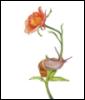 SnailRose