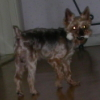 shadow_wolf1211 userpic