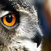 Gypsy Owl Icons