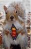 general: squirrel