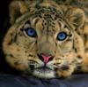 lenalla userpic