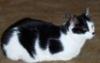 Maia C: Catloaf