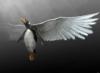 мой ангел-пингвин
