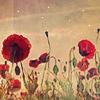 :): flower - red