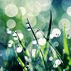 grass/rain