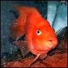 trappedangel userpic
