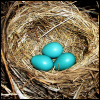 animals- robins eggs