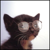 animals- nerdycat!