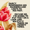 Lover of fictional 19th century British gentlemen: P&P watch darcy 3 or 20 times