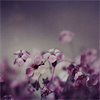 melancholie userpic