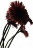 parchmentpetals userpic