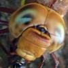meganeura userpic