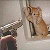 Не стреляйте в рыжих котов