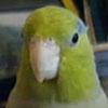 zigmund userpic