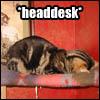 catmacros-headdesk