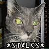 Wiveca: Cat: Bubba stalks