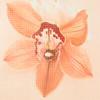 ennui_blue_lite: random flower