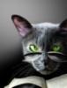 mefisto_cat userpic