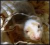 мышка в мешке