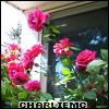 summer 2007, roses 2007