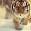 wudu_wasa userpic