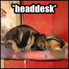 Lolcat - Headdesk