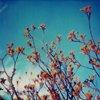 sky/trees