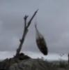 Перо на ветру