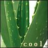 Vera: cool vera