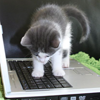 svanderslice: Kitties - laptop