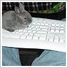 keyboard bunny