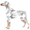 whitedobermann userpic