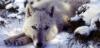 white_wolfess userpic
