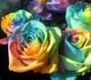 rainbowparade userpic