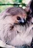 twotoedsloth userpic