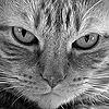 dadi_ja: cat