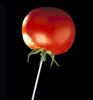 tomato_lollipop