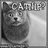 Cat Macro - Catnip?