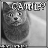 Madam Mina: Cat Macro - Catnip?
