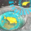 zlata rybka