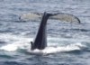 Dottie Dear: It's A Whale of A Tail!