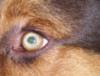 Duncan's eye