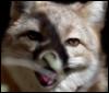 swift_j_fox userpic