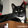 wednesday childe: yoshi