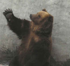 wise old bear