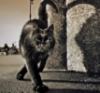 black_cat254 userpic