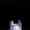 Misc: horse