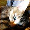 Коты Люся