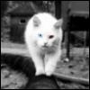 sashok_privetov userpic