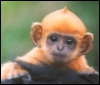 Cute Mohawk Monkey